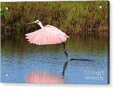 Acrylic Print featuring the photograph Roseate Spoonbill  by Jennifer Zelik