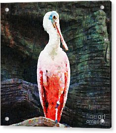 Roseate Spoonbill Painting Acrylic Print by Magomed Magomedagaev