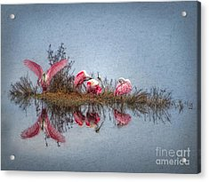 Acrylic Print featuring the digital art Roseate Spoonbills At Rest by Lianne Schneider