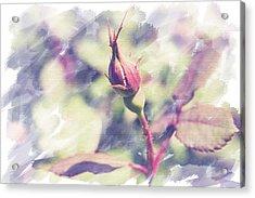 Rosebud Acrylic Print by Eric Ziegler