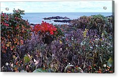 Acrylic Print featuring the photograph Rosehip by Mim White