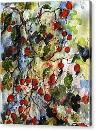 Rosehips By Ginette Watercolor And Ink Acrylic Print