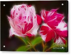Roses 6221-fractal Acrylic Print by Gary Gingrich Galleries
