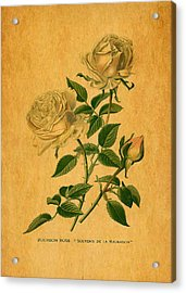 Roses Are Golden Acrylic Print by Sarah Vernon