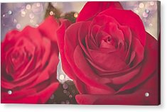 Roses For Me  Acrylic Print by Maibel  Ziello