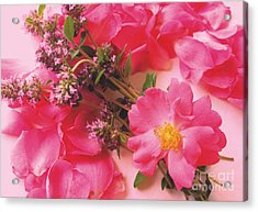 Roses In Thyme Acrylic Print