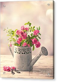 Roses In Watering Can Acrylic Print by Amanda Elwell