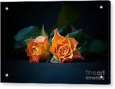 Roses Acrylic Print by Jaroslaw Oleksyk