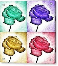 Roses - Pop Art Acrylic Print