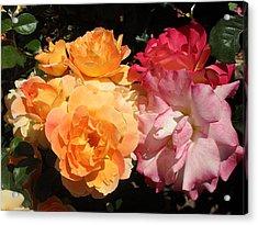 Roses Roses Roses Acrylic Print by Mark Barclay