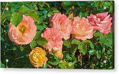 Roses Acrylic Print by Van Ness