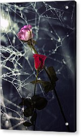 Roses With Coweb Acrylic Print by Joana Kruse