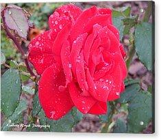 Rosie Red Acrylic Print