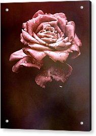 Rosy Fog Acrylic Print