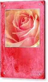 Rosy Acrylic Print by Randi Grace Nilsberg