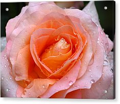 Rosy Rose Acrylic Print by Juergen Roth