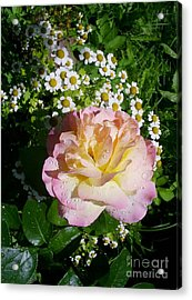 Rosy Shades II Acrylic Print by Anna Yurasovsky