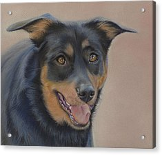 Acrylic Print featuring the painting Rottweiler - Drawing by Natasha Denger