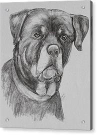 Rottweiler Acrylic Print