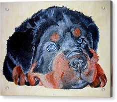 Acrylic Print featuring the painting Rottweiler Puppy Portrait by Tracey Harrington-Simpson