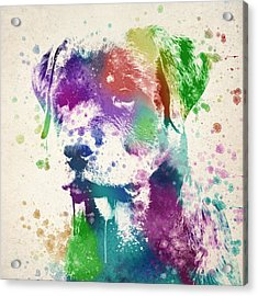 Rottweiler Splash Acrylic Print