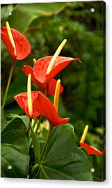 Rousing Reds Acrylic Print by Dee Dee  Whittle