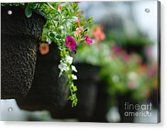 Row Of Hanging Baskets Shallow Dof Acrylic Print by Amy Cicconi