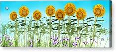 Row Of Sunflowers Acrylic Print