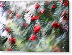 Rowan Tree Under The Silver Rain. Impressionism Acrylic Print by Jenny Rainbow