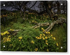 Rowena Preserve Acrylic Print by Jean-Jacques Thebault