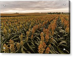 Acrylic Print featuring the photograph Rows Of Color by Scott Bean