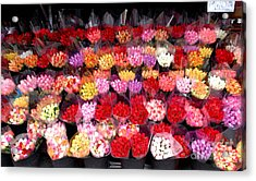 Rows Of Roses Acrylic Print