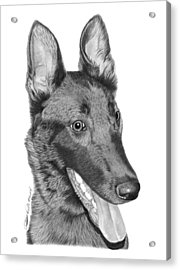 Acrylic Print featuring the drawing Roxy - 028 by Abbey Noelle