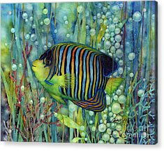 Royal Angelfish Acrylic Print by Hailey E Herrera