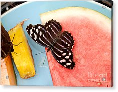 Acrylic Print featuring the photograph Royal Blue Butterfly by Eva Kaufman