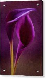Royal Cayla Acrylic Print