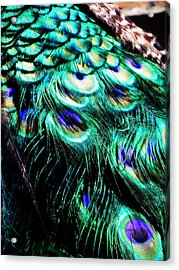 Royal Cloak Acrylic Print