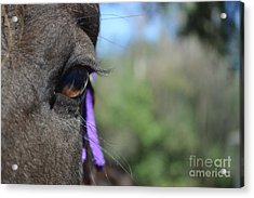 Royal Lashes Acrylic Print by Catherine Peterson