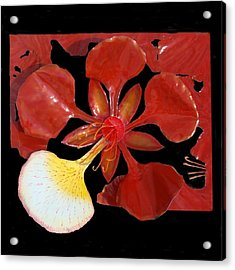Royal Poinciana Bloom Set In A Bed Of Petals Acrylic Print by Diane Snider