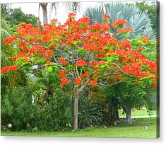 Acrylic Print featuring the photograph Royal Poinciana by Kay Gilley