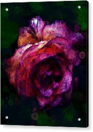 Royal Rose Painted Acrylic Print