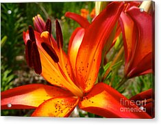 Royal Sunset Lily Acrylic Print by Jacqueline Athmann