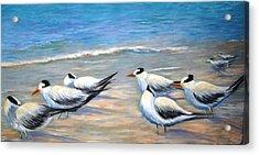 Royal Terns Acrylic Print by Teresita Hightower