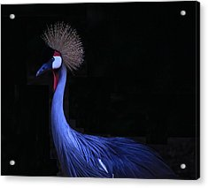 Animal 6 Acrylic Print