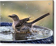 Acrylic Print featuring the photograph Rub-a-dub-dub Mockingbird by Nava Thompson