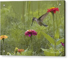 Ruby Oil Acrylic Print by Cris Hayes