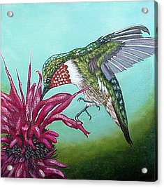 Acrylic Print featuring the painting Ruby-throated Hummingbird by Fran Brooks
