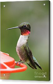 Ruby-throated Hummingbird Male 11702-1 Acrylic Print by Robert E Alter Reflections of Infinity