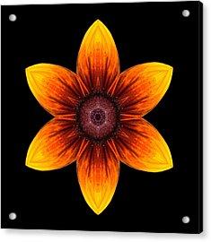 Rudbeckia I Flower Mandala Acrylic Print by David J Bookbinder