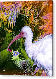 Ruffled Feathers Acrylic Print by Doris Wood